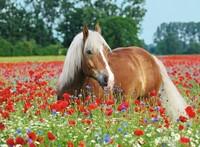 Paard Tussen De Klaprozen Puzzel (500 stukjes)-2