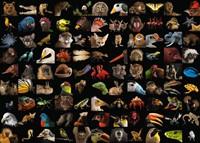 99 Prachtige Dieren Puzzel (1000 stukjes)-2