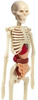 Wetenschap & Spel - Ontdek Het Menselijk lichaam-2