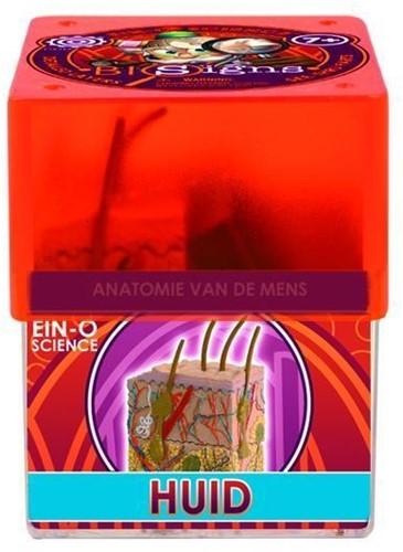 Ein-O Science Anatomie van de mens Huid-1