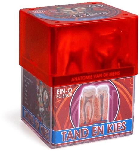 Ein-O Science Anatomie van de mens Tand en Kies-1