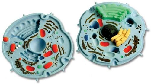 Ein-O Science Cellen en Microbiologie Dierlijke Cel-2