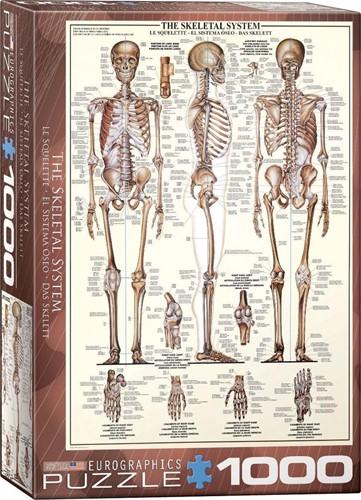 Skeletal System Puzzel (1000 stukjes)