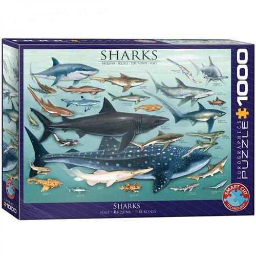 Sharks Puzzel (1000 stukjes)